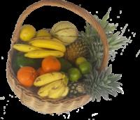 fruitsxxx-1.png